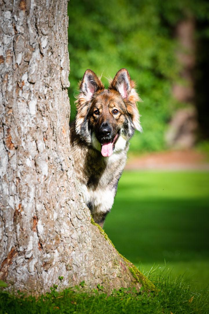 Dog Panting by Tree